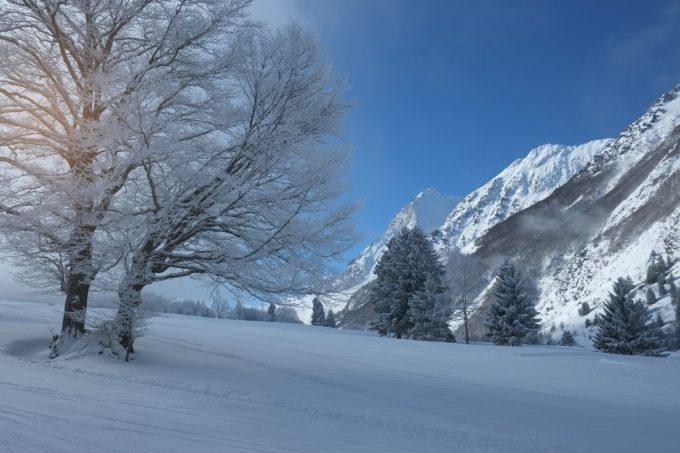 Col d'Ornon forêt